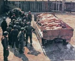 004-falsches-Auschwitz-foto-m-ami-soldaten-deutsche-Leichen-auf-Lastwagenanhaenger.jpg